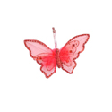 Papillon plume