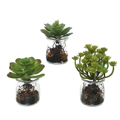 Succulente artificielle dans pot en verre