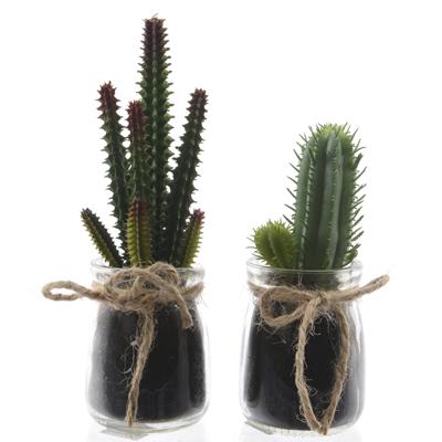 Cactus dans pot en verre